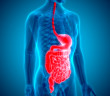 Gastroenterologisches System © Magic mine / shutterstock.com