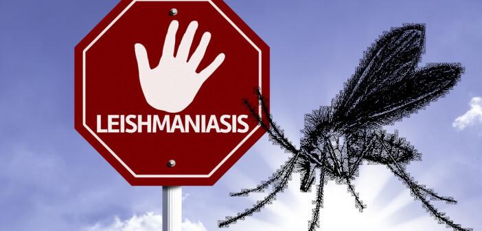 Leishmaniạsen sind durch Einzeller – so genannten Leishmanien – hervorgerufene Infektionskrankheiten, die durch Sandmücken übertragen werden. © Gustavo Frazao / shutterstock.com / AFCOM – Montage