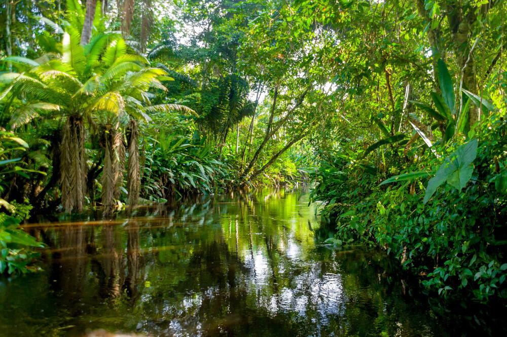 Blick in den Dschungel am Amazonas © Pablo Hidalgo - Fotos593 / shutterstock.com