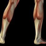 Magnesium und Kalium gehören zu den wichtigsten Mineralstoffen für die Muskulatur. © design36 / shutterstock.com