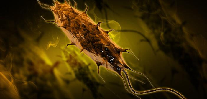 Urogenitale Infektionen meist bakteriell: Bei 75 bis 90% der Harnwegsinfekte ist der Auslöser E.coli. © SARANS / shutterstock.com