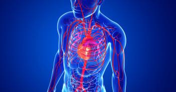 Weltweit gehören Herz-Kreislauf-Erkrankungen zu den häufigsten chronischen Erkrankungen und sind die Todesursache Nummer eins. © S K Chavan / shutterstock.com