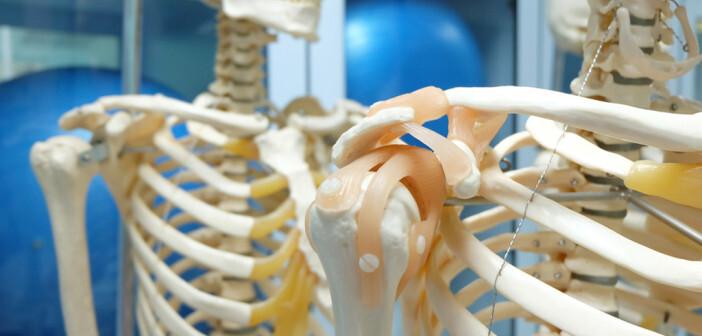 Stärke und Größe der Knochen sind wichtige Parameter. © Tinydevil / shutterstock