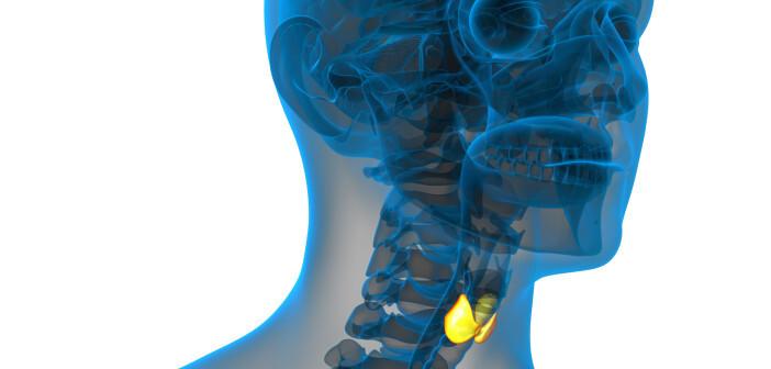 Schilddrüsenkrebs mit Beteiligung der Halslymphknoten galt bisher insbesondere bei älteren Patienten als besonders gefährlich. © Maya2008 / shutterstock.com