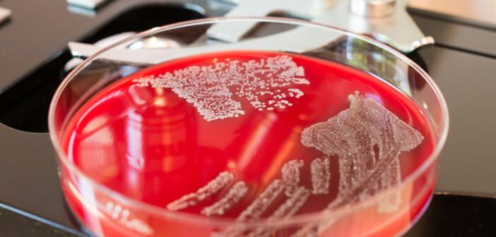 Antibiotikaabgabe in der Tiermedizin ist rückläufig. © Zaharia Bogdan Rares / shutterstock.com