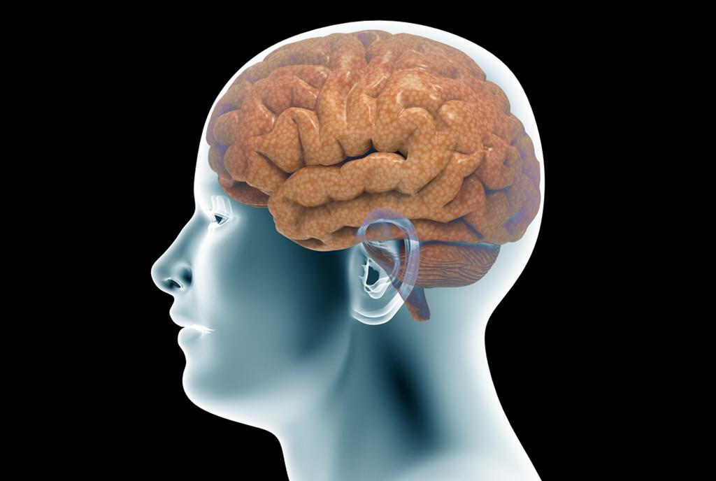 Gesunde Ernährung schützt das Gehirn. © posteriori / shutterstock.com