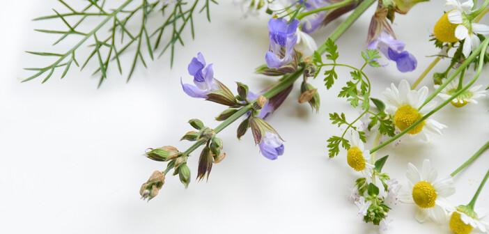 Kamille und Fenchel gehören zu den beliebtesten Heilpflanzen gegen Bauchweh. Die beiden Phytotherapeutika wirken entzündungshemmend und beruhigend. © Botamochy / shutterstock.com