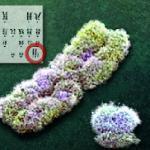 Ursache für das Klinefelter-Syndrom ist eine chromosonale Störung.