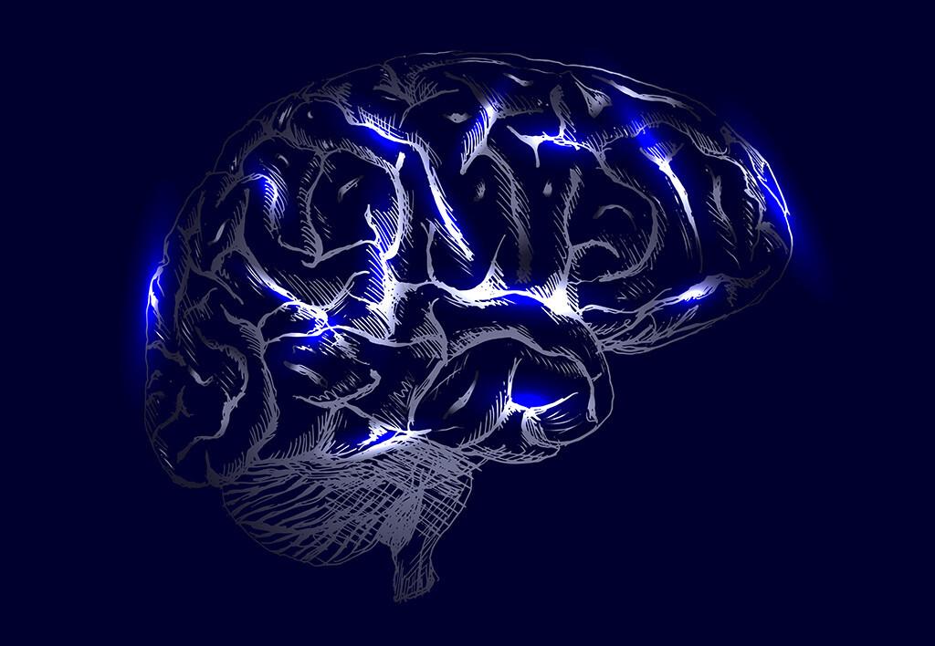 Gehirn © onot / shutterstock.com