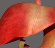 Effektiv kann durch Lebensstiländerungen die Nicht-alkoholische Fettleber behandelt werden. © Life science of anatomy / shutterstock.com