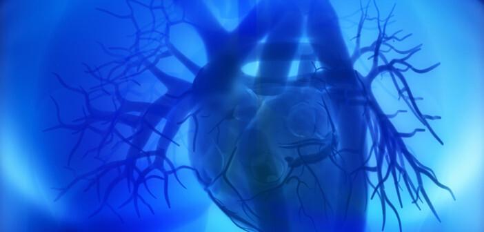 Menschliche Herzmuskelzellen regenerieren sich nicht wieder, da das Zentrosom nach der Geburt zerfällt. © CLIPAREA Custom media / shutterstock.com