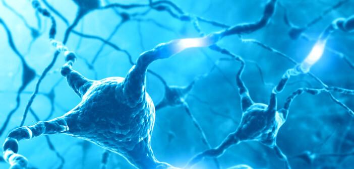 Eine relativ neue Erkenntnis besagt, dass Dopaminmangel im Gehirn auch die Interaktion zwischen MSNs und anderen Neuronen, sogenannten Fast-Spiking-Neuronen (FSN), stört - was zukünftig für die Behandlung von Parkinson-Patienten von großer Relevanz sein kann. © ktsdesign / shutterstock.com