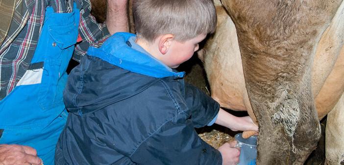 Ein Kind melkt unter Aufsicht eines Landwirts eine Kuh von Hand – Rohe Kuhmilch für Säuglinge schützt vor Atemwegsinfekten, Fieber und Mittelohrentzündung. © Dr. von Haunersches Kinderspital am Klinikum der Ludwig-Maximilians-Universität München