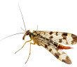 Mit Repellentien Insekten erfolgreich abwehren zu wollen, ist praktisch niemals 100%-ig erfolgreich. © irin k / shutterstock.com