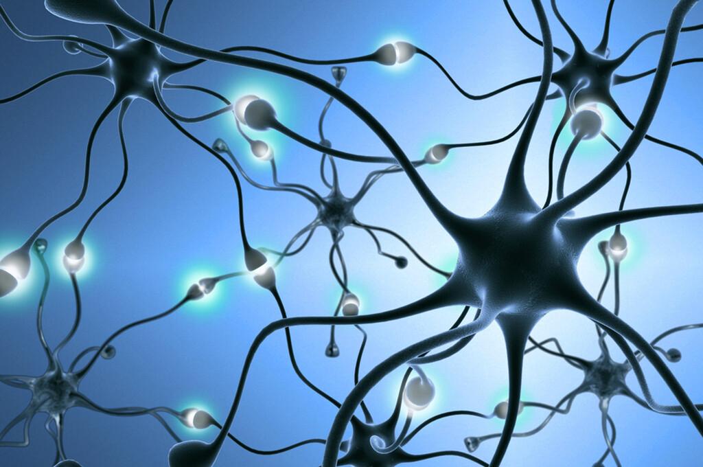 Eine Nervenzelle will Partner finden und sich über Netzwerke miteinander verbinden. © StudioSmart / shutterstock.com