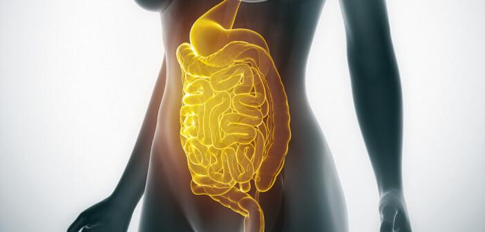 Die richtige Ernährung bei Reizdarmsyndrom ist einer der wichtigsten Eckpfeiler in der Behandlung dieser chronischen Magen-Darm-Erkrankung. © CRYONOID Custom media / shutterstock.com