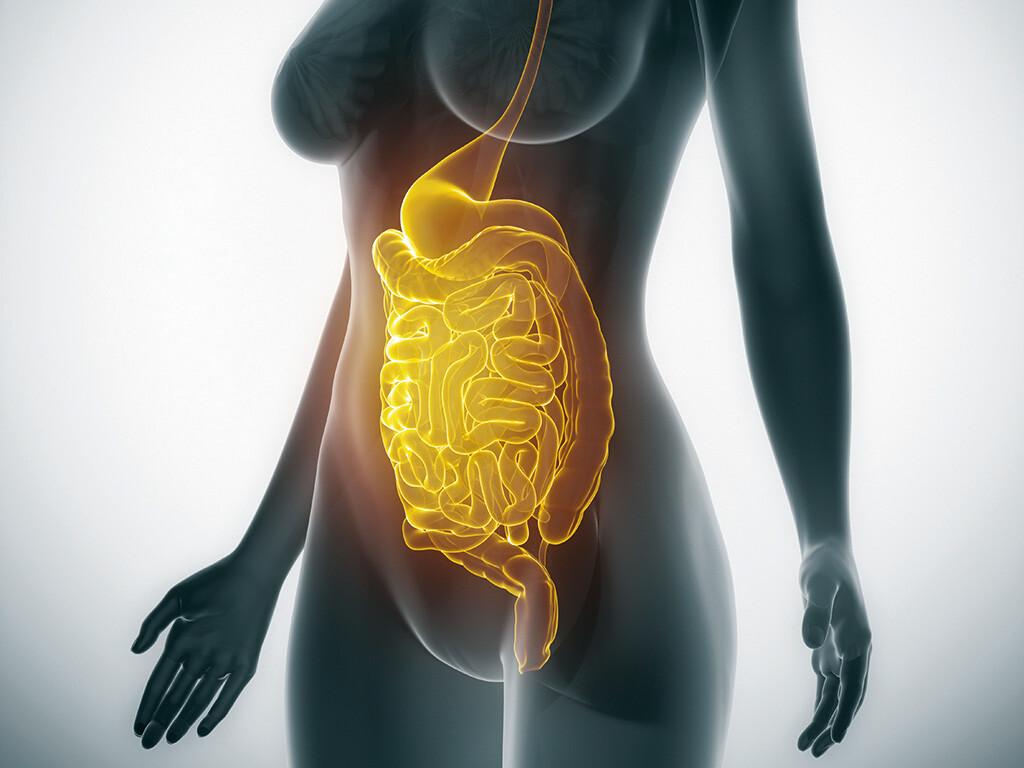 Ernährung Bei Reizdarmsyndrom