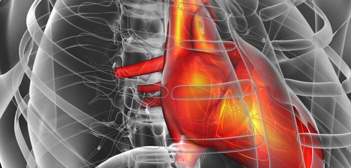 Neue Therapien bei Herzinsuffizienz am Dreiländertreffen Herzinsuffizienz im Mittelpunkt. © Maya2008 / shutterstock.com