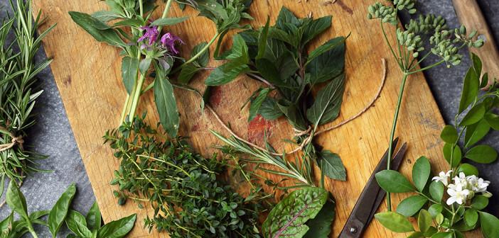 Verschiedene Heilpflanzen lassen sich sehr gut mit Zucker vermischen und einsetzen. Als Hausmittel gegen Husten ist der Hustenzucker seit vielen Jahre im Einsatz. © Malivan Iuliia / shutterstock.com