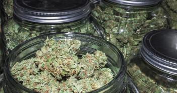 Das bloße Hantieren mit Cannabis kann relevante Mengen Cannabinoide auf das Haar übertragen und eine Haaranalyse als THC-Nachweis falsch interpretieren lassen. © OpenRangeStock / shutterstock.com