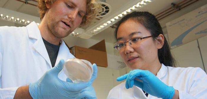 Martin Baunach und Ling Ding vom HKI betrachten eine Kulturschale mit den Wirtsbakterien, die die neuen Sulfonamide produzieren. © HKI / Tina Kunath