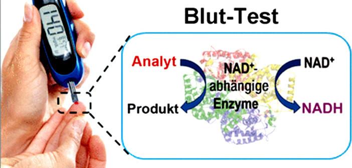 Kombiniert man ein Blutzuckermessgerät mit NADH-Molekülen als Mediator an der Elektrode, so kann man mit einem Gerät sowohl den Blutzucker als auch den Laktat-Spiegel messen. © Wiley-VCH
