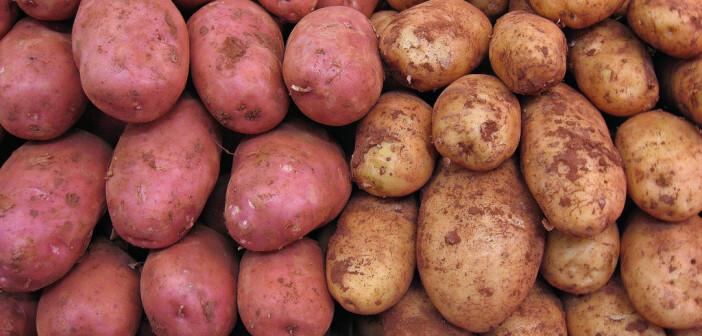 Bisher gab es zur Verschwendung bei Kartoffeln nur aus England genauere Zahlen. Dort enden rund zwei Drittel der Kartoffeln im Abfall. © 16:9clue via flickr Creative Commons