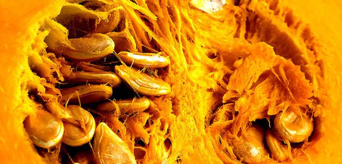 Die antikanzerogene Wirkung von Kürbis unterstütz bei der Prävention gegen Krebs. © topnatthapon / Shutterstock.com