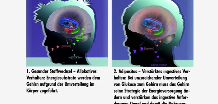 Die Selfish-Brain-Theorie unterstellt, dass das (egoistische) Gehirn in Versorgungsnot auch gegen unseren Willen (z.B. bei Diät) seine Energieansprüche sogar durchsetzen kann. Bildquelle: www.selfish-brain.org