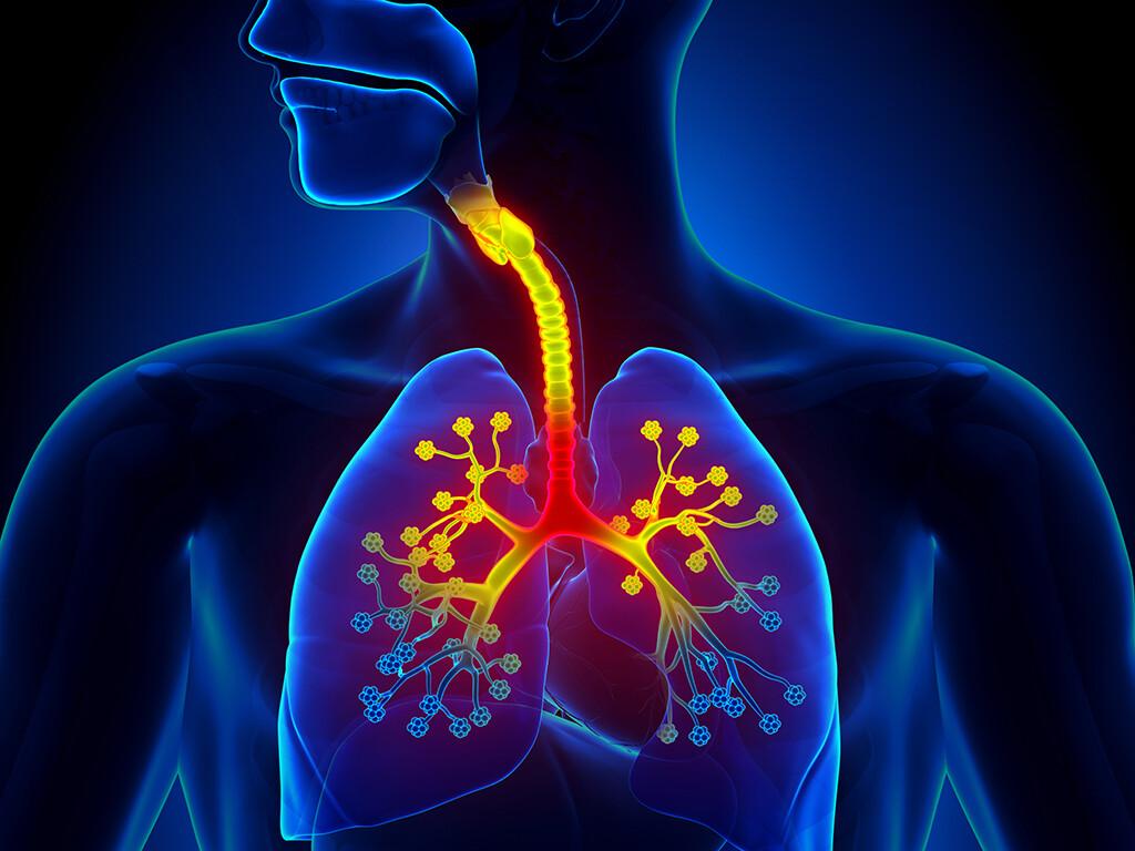 Schlafapnoesyndrom, chronische Entzündungsreaktion der Bronchien, gastroösophagealer Reflux und jegliche Obstruktion der oberen Atemwege wie allergische Rhinitis haben eine zusätzlich negative Auswirkung auf die Schlafqualität bei Patienten mit Asthma bronchiale. © decade3d - anatomy online / shutterstock.com