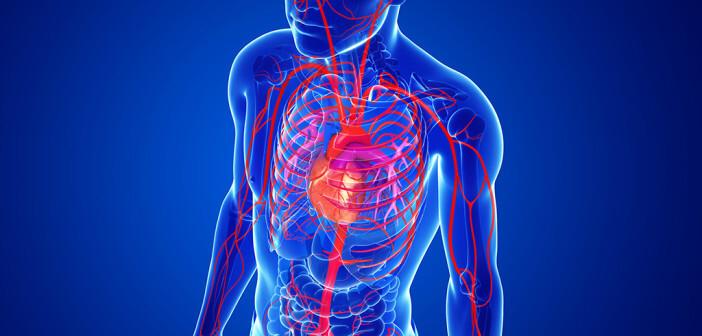 Angiotensin-Rezeptorblocker (ARB) zeichnen sich durch eine günstige Kinetik aus. @ S K Chavan / shutterstock.com