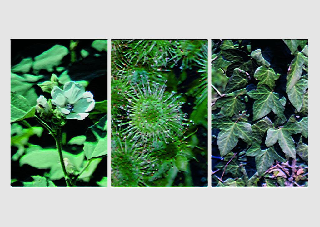 Gegen Husten kommen zahlreiche Heilpflanzen zum Einsatz, die Wirkungen von speziellen Teerezepturen sind gut untersucht.