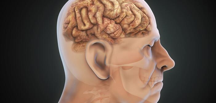 Die Menge von L-Dopa im Blut sollte gleichmäßig gehalten werden. © Nerthuz / shutterstock.com