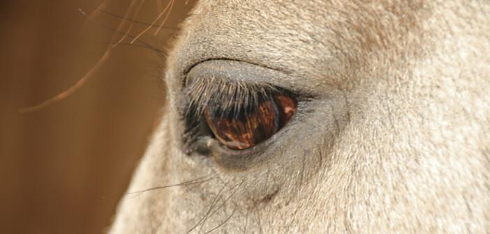 Diese Therapie mit Pferden beruht auf die Interaktion der erwachsenen Patienten mit den Pferden. © chrion-therapie.at