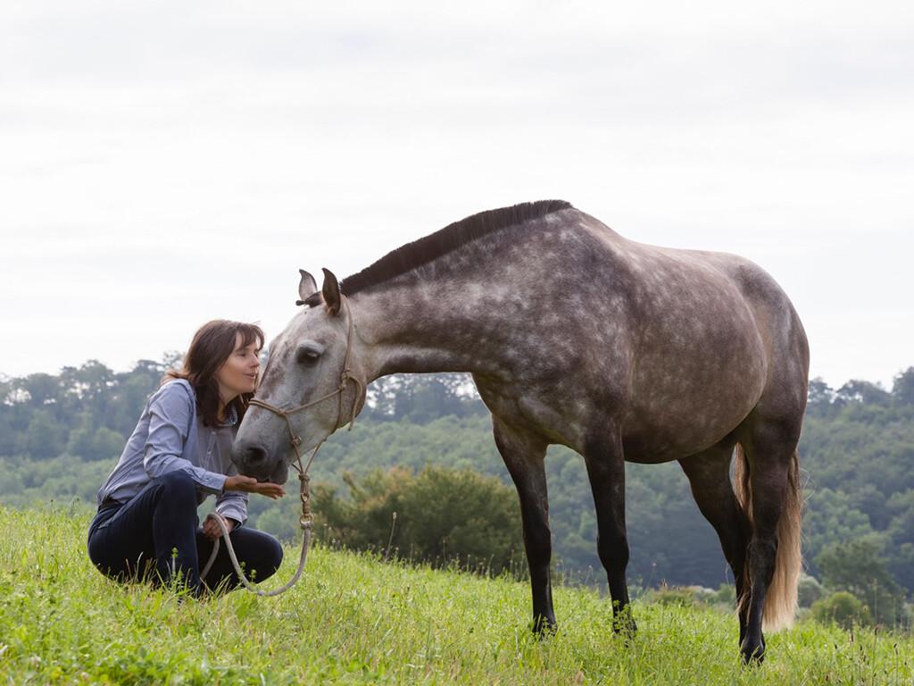 Therapie mit Pferden1