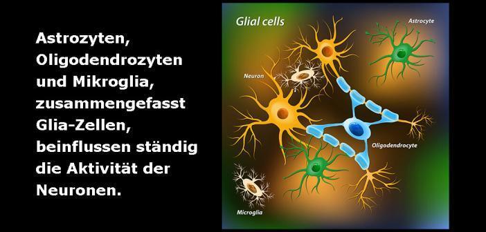 Astrozyten, Oligodendrozyten und Mikroglia – und Neuronen © Designua / shutterstock.com