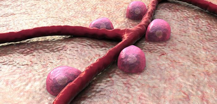Die Grafik zeigt Betazellen – maßgeblich bei Diabetes-Typ-1 beteiligt – und Blutgefäße auf der Pankreasoberfläche. © UGREEN 3S / shutterstock.com