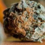 Das natürlich in Cannabis vorkommende Cannabinoid Tetrahydrocannabinol (THC) ist besonders synergetisch mit Opioiden. © Wollertz / shutterstock.com