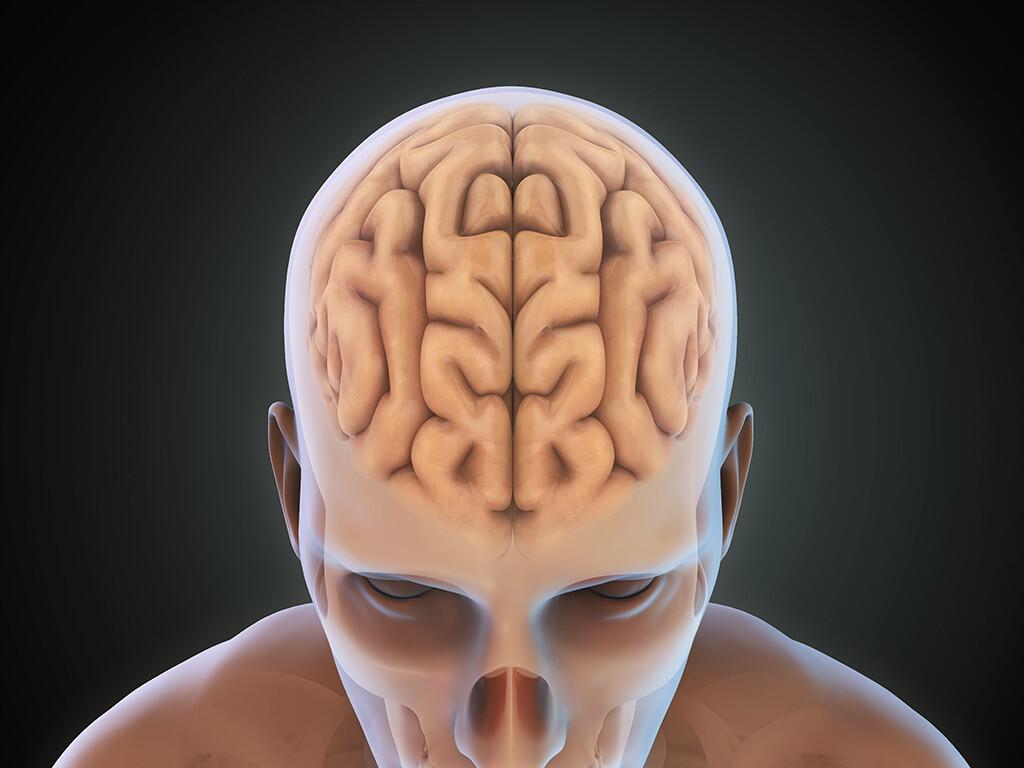 Möglicherweise kann Alzheimer durch die Transplantation der Hirnhaut übertragen werden. © Nerthuz / shutterstock.com