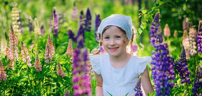 Lupinen gelten einerseits als Zier- und Wildpflanzen, andererseits aber auch als Gemüse- und Futterpflanzen. © Maria Evseyeva / shutterstock.com
