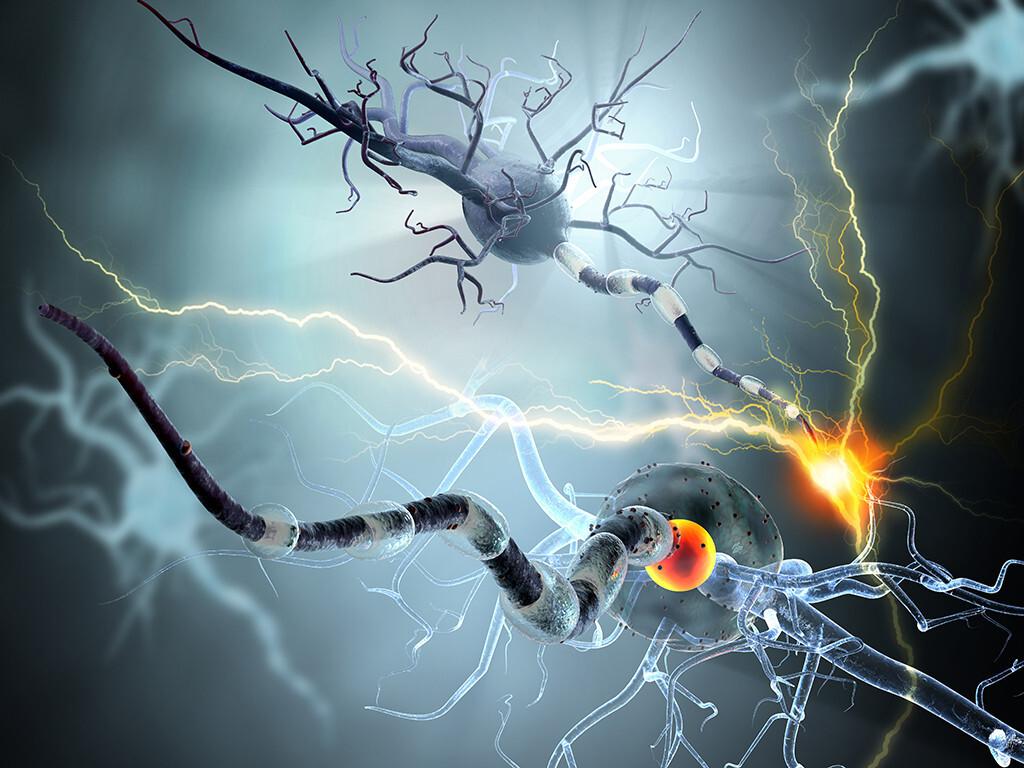 Forscher entdeckten, dass hochdosiertes Vitamin D fehlgeleitete Immunzellen stoppt. © Ralwel / shutterstock.com