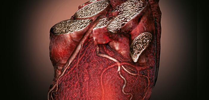 Herzinsuffizienz vorbeugen: Risikogruppen erkennen und behandeln.