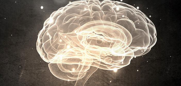 Die aktuelle Studie zeigt, dass ein Teil des Flynn-Effektes durch die Steigerung der Gehirnmasse erklärt werden kann. © Sergey Nivens / shutterstock.com