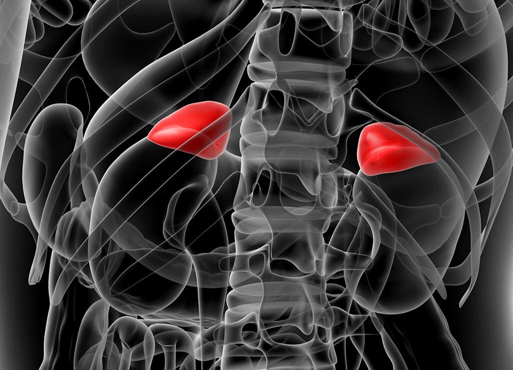 Bei bis zu zwei Drittel der Patienten ist das Cushing-Syndrom Folge einer Mutation in dem Gen PRKACA. © Maya2008 / shutterstock.com