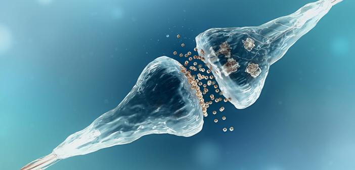 Ob die hemmenden oder aber die stimulierenden Neurotransmitter freigesetzt werden, hängt offensichtlich von psychosozialen Einflüssen ab, was den erwähnten Zusammenhang Stress und Krebs unterstreicht. © adike / shutterstock.com