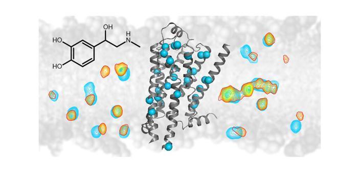 NMR-G-Protein-gekoppelte-Rezeptoren untersucht: Die NMR-Spektroskopie zeigt Signalweiterleitung von Arzneimitteln im Beta-1-Adrenorezeptor. Grafik: Universität Basel