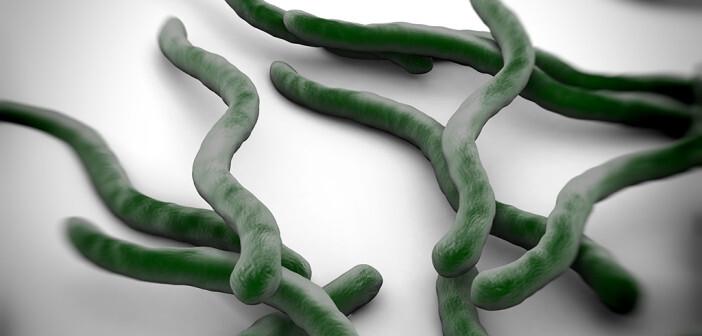 """Die Borreliose wird durch spezielle Bakterien mit dem Namen """"Borrelia burgdorferi"""" verursacht. © royaltystockphoto.com / shutterstock.com"""