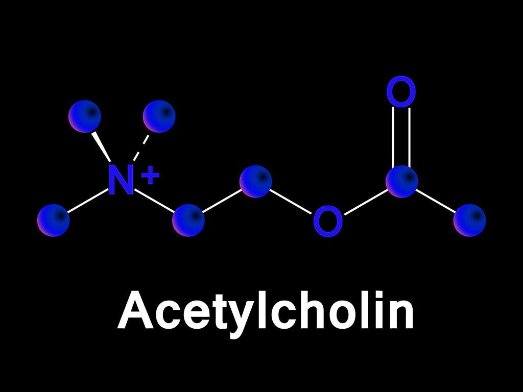 Bei älteren Personen ist die Bereitstellung des Botenstoffs Acetylcholin (mit seiner Ausgangssubstanz Cholin) häufig unzureichend. © lyricsaima / shutterstock.com