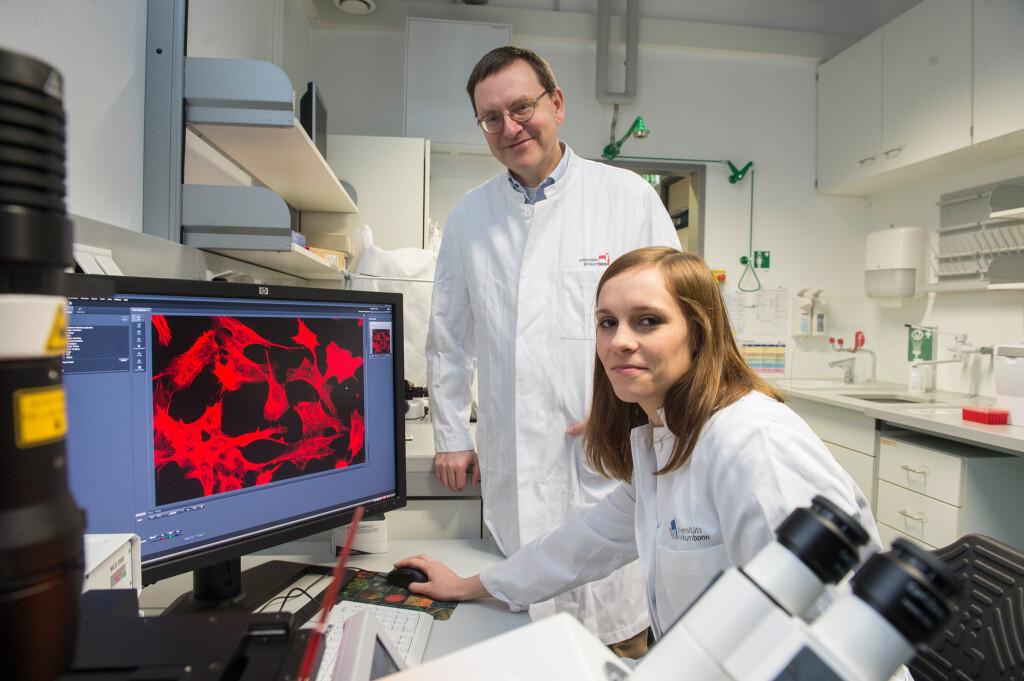 Untersuchen braune Fettzellen, zur Ankurbelung der Fettverbrennung, im Labor: Prof. Dr. Alexander Pfeifer und Katarina Klepac vom Institut für Pharmakologie und Toxikologie der Universität Bonn. © Barbara Frommann/Uni Bonn