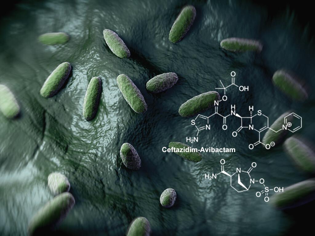 Mit Ceftazidim und Avibactam kombiniert (CAZ-AVI) gegen gramnegativen Bakterien. © royaltystockphoto.com / shutterstock.com